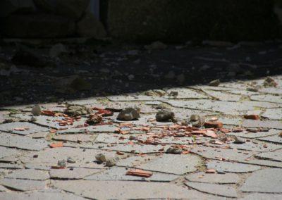 montegallo-e-il-terremoto29