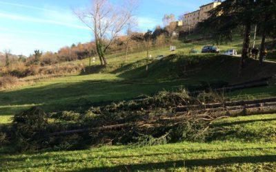 Taglio degli Alberi adiacenti al Terreno a Montegallo