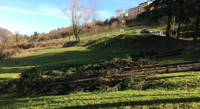 > Taglio degli Alberi adiacenti al Terreno a Montegallo