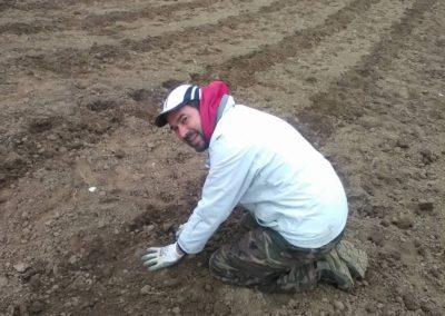 Messa a terra delle piante di Lavanda dei Sibillini 1