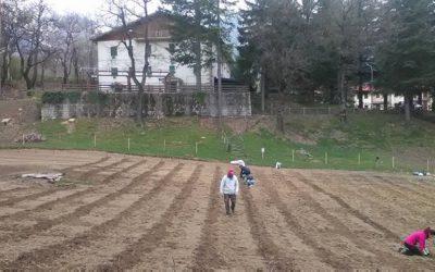Completata la Recinzione e la messa a terra di 1500 piante di Lavanda