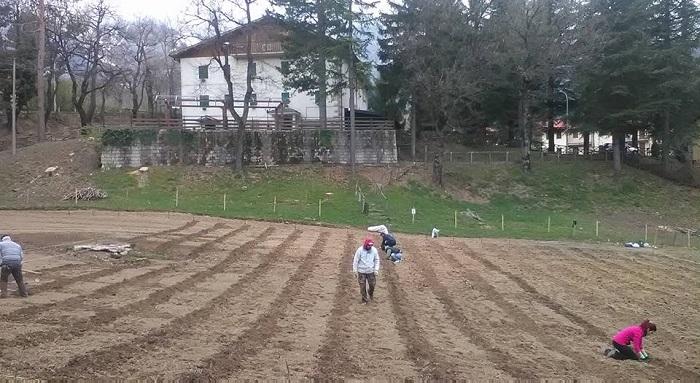 > Completata la Recinzione e la messa a terra di 1500 piante di Lavanda