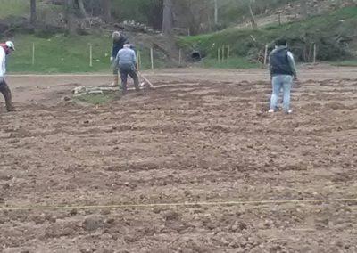 Messa a terra delle piante di Lavanda dei Sibillini6