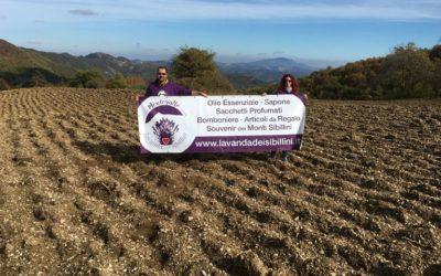 Nuova Piantagione Lavanda dei Sibillini ad Astorara di Montegallo (AP)