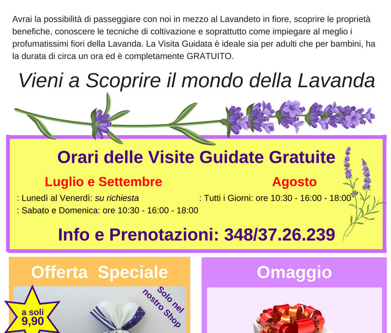 Apertura Punto Shop e Visite Guidate Gratuite alla fioritura di Lavanda dei Sibillini