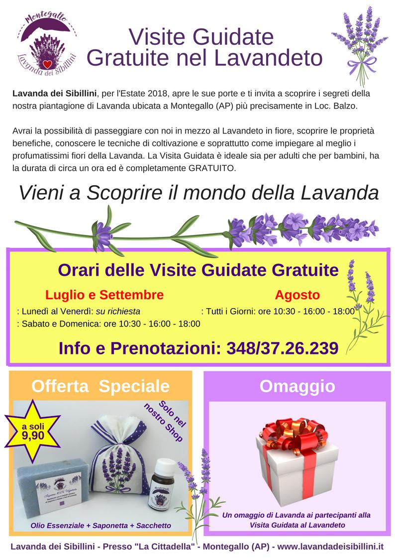 Punto Shop e Visite Guidate Gratuite alla fioritura di Lavanda dei Sibillini