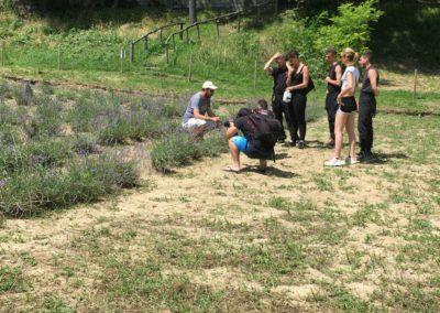 Visita Guidata al Campo di Lavanda dei Sibillini a Montegallo