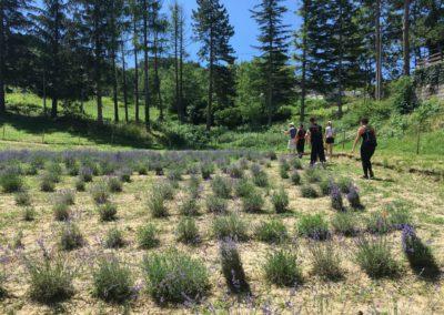 Visita Guidata al Campo di Lavanda dei Sibillini a Montegallo10