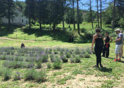 Visita Guidata al Campo di Lavanda dei Sibillini a Montegallo12