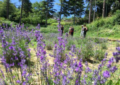 Visita Guidata al Campo di Lavanda dei Sibillini a Montegallo3