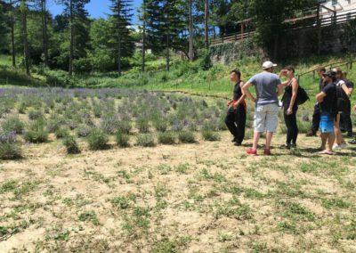 Visita Guidata al Campo di Lavanda dei Sibillini a Montegallo5