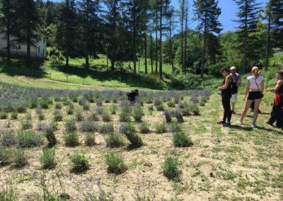 Visita Guidata al Campo di Lavanda dei Sibillini a Montegallo9
