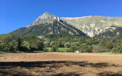 Nuova Piantagione di Lavanda dei Sibillini … ci siamo!