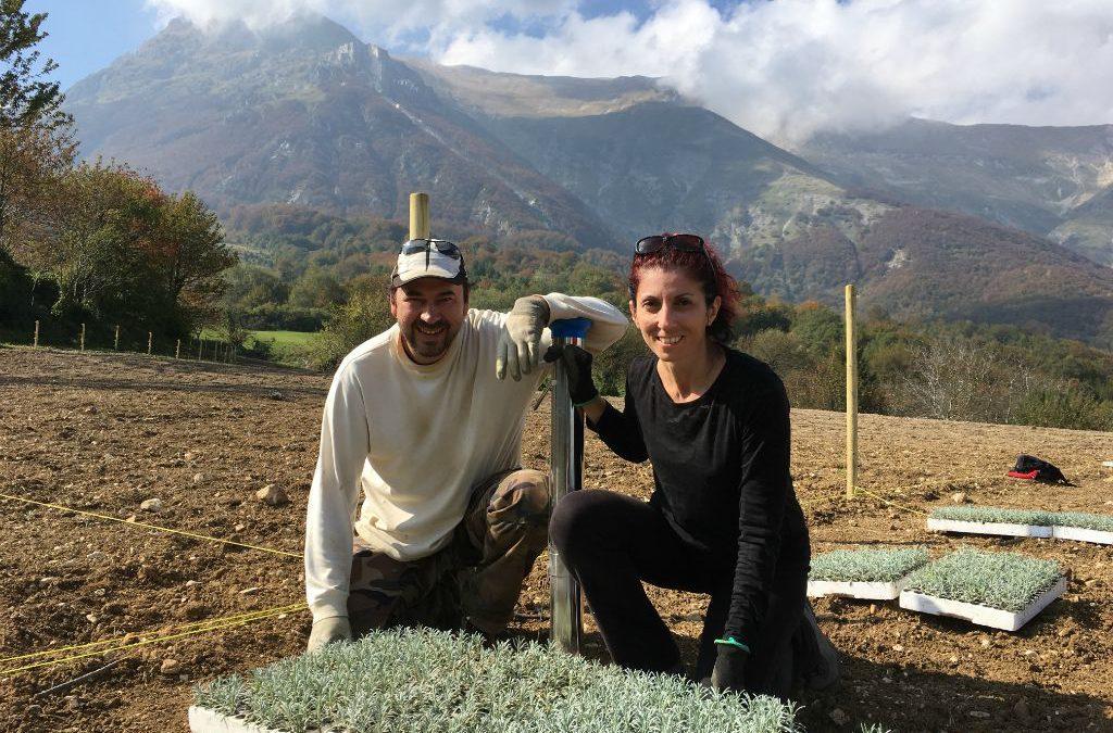 Nuova piantagione Lavanda dei Sibillini a Montegallo: Ora è Realtà!