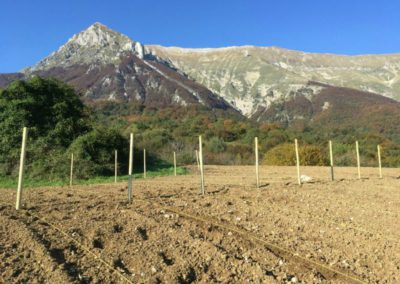 Piantumazione Campo Lavanda dei Sibillini Astorara Montegallo11