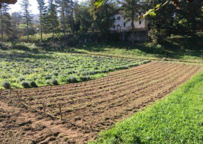 Piantumazione Campo Lavanda dei Sibillini Balzo Montegallo3
