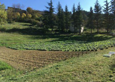 Piantumazione Campo Lavanda dei Sibillini Balzo Montegallo6