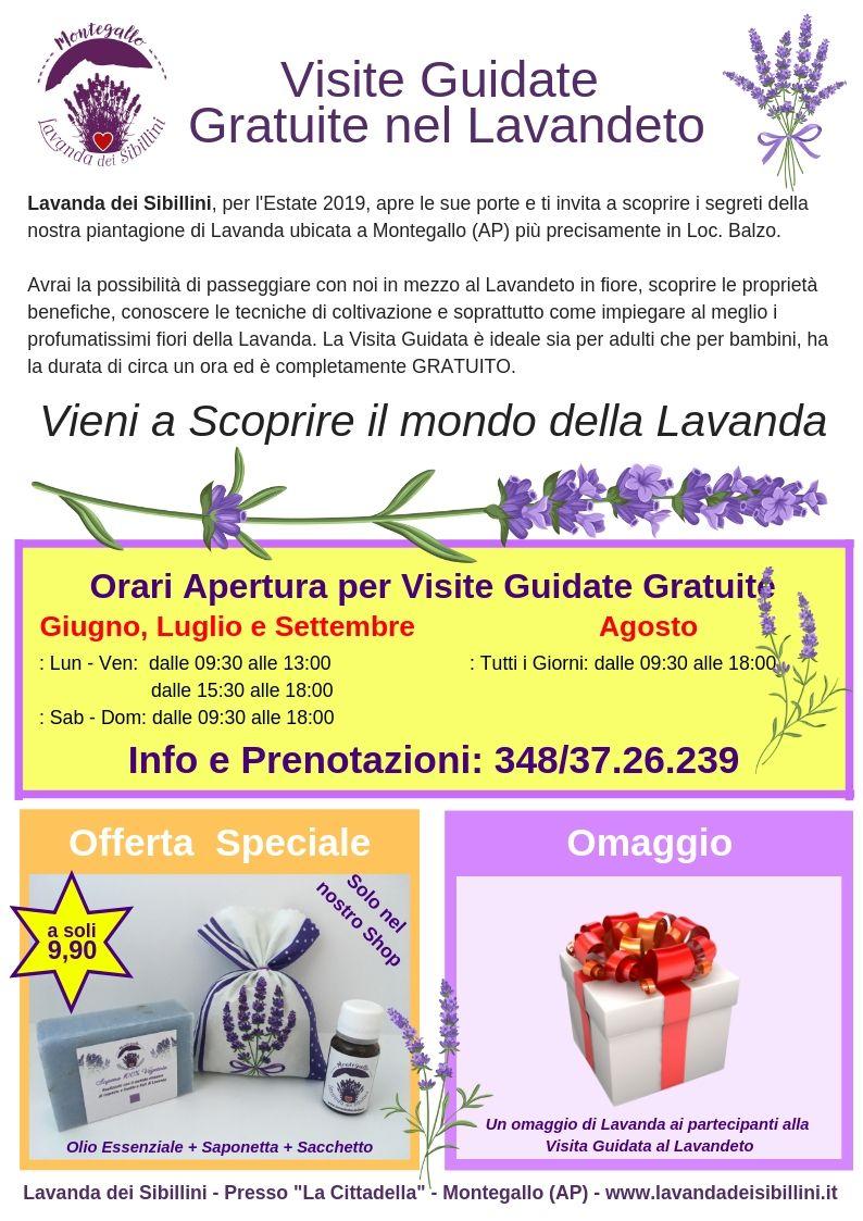 Visite Guidate Gratuite alla fioritura di Lavanda dei Sibillini
